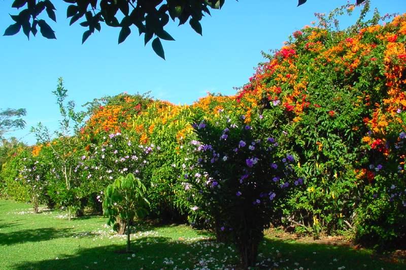 Parc Hôtel Bougainvillea