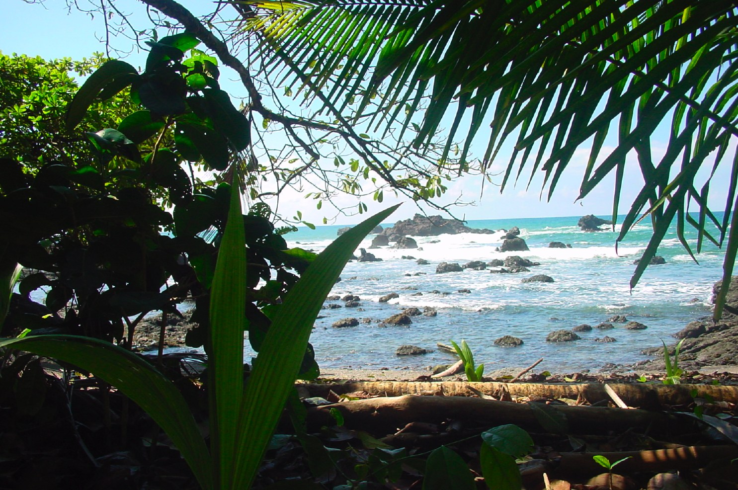 Jungle and Sea