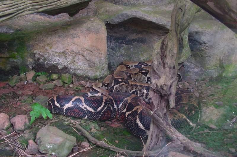 serpentarium10