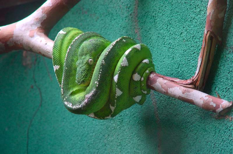 Serpentarium5