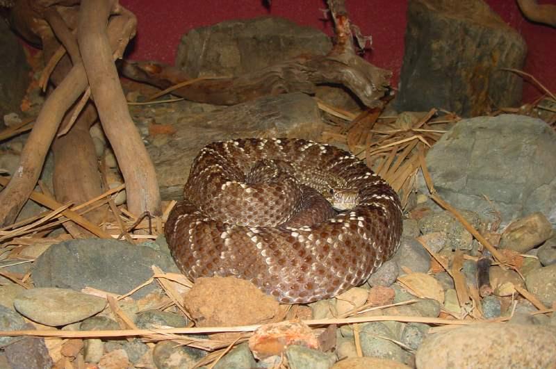 serpentarium1