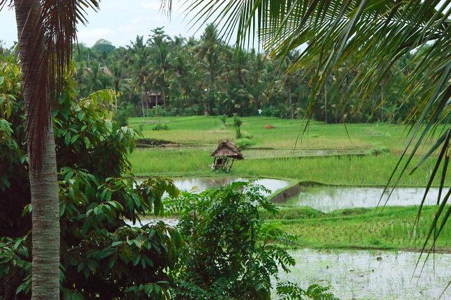 Environment Cendra Wasi