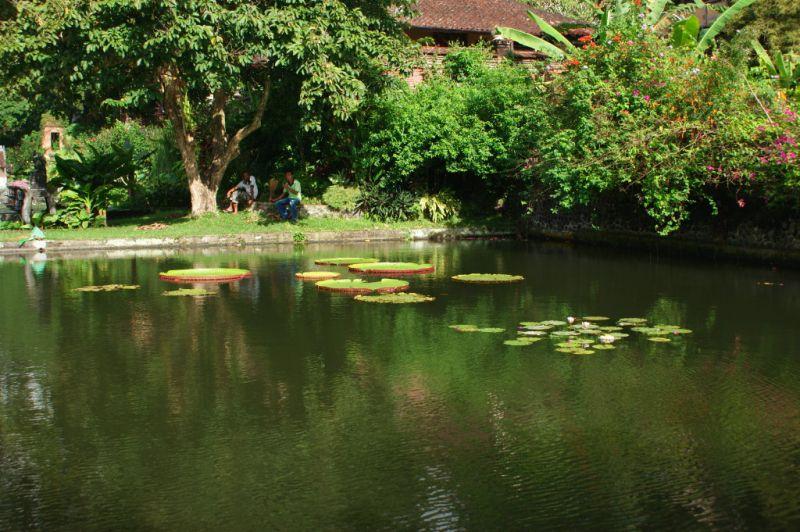 Palais Aquatique, Tirtagangga,6