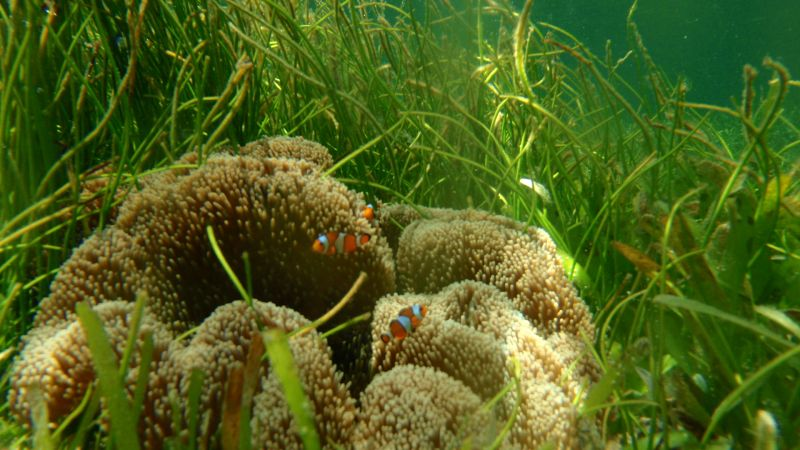 poissons Nusa Dua