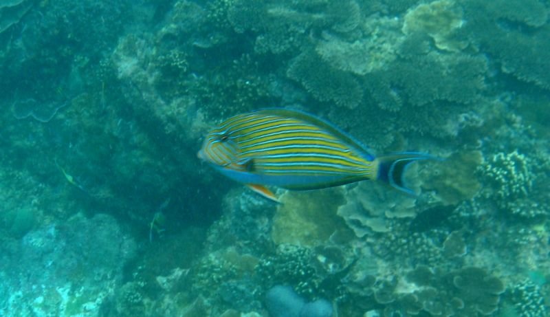 poissonslembogan010219.jpg