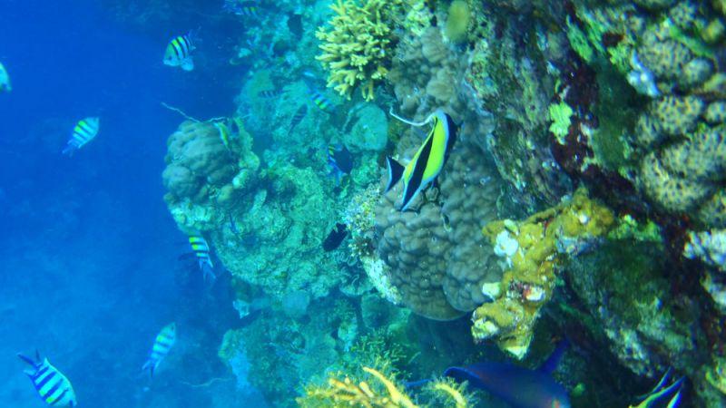 Snorkeling à l'île de Menjangan